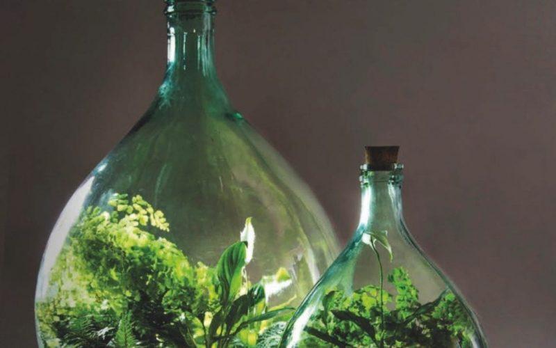 Bottle Garden Growing