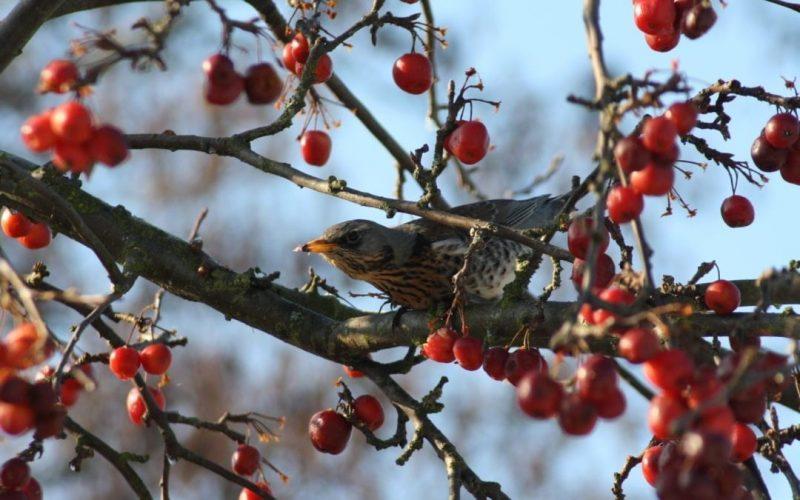 Garden Birds Deep Winter Rescue