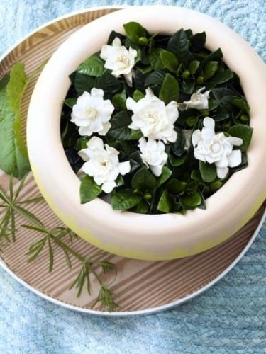 Gardenia-Scented-Diva