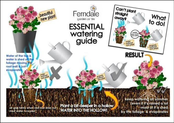 Guide-to-summer-watering