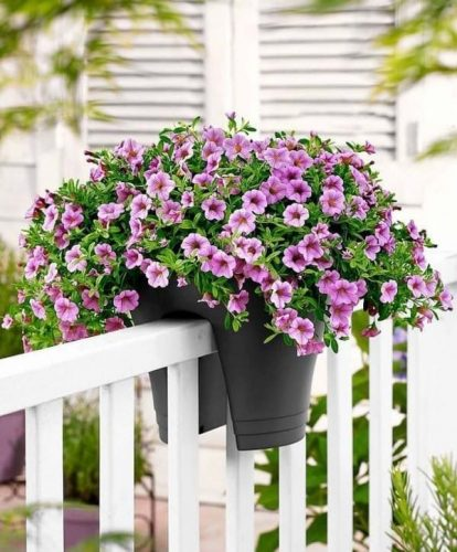Successful-Patio-Gardening-Summer