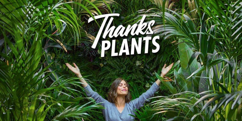 Thanks-plants