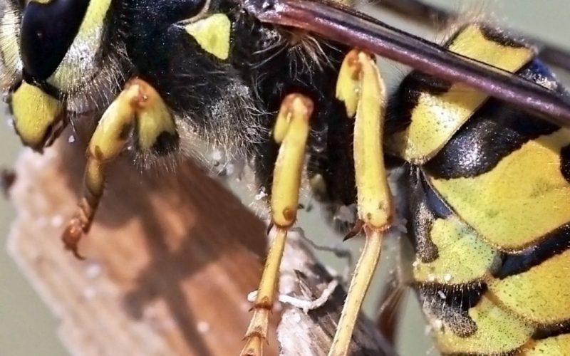 Wasps, friend or foe