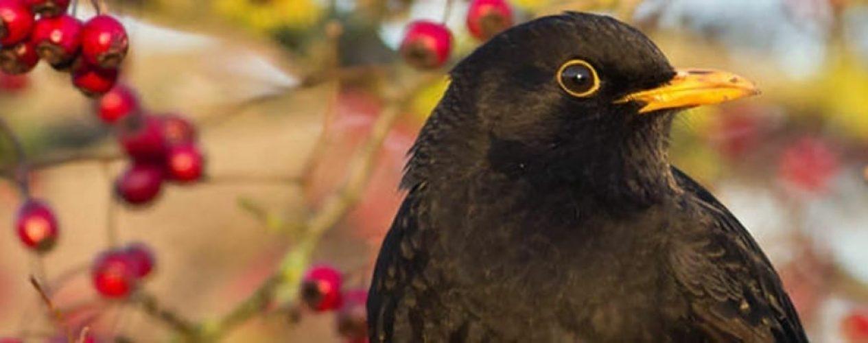 Why feed your garden birds