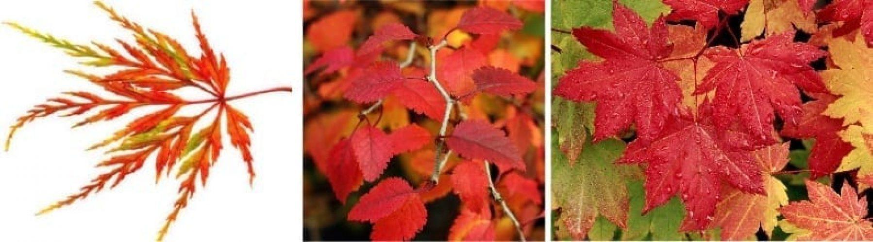 autumn-the-forgotten-season