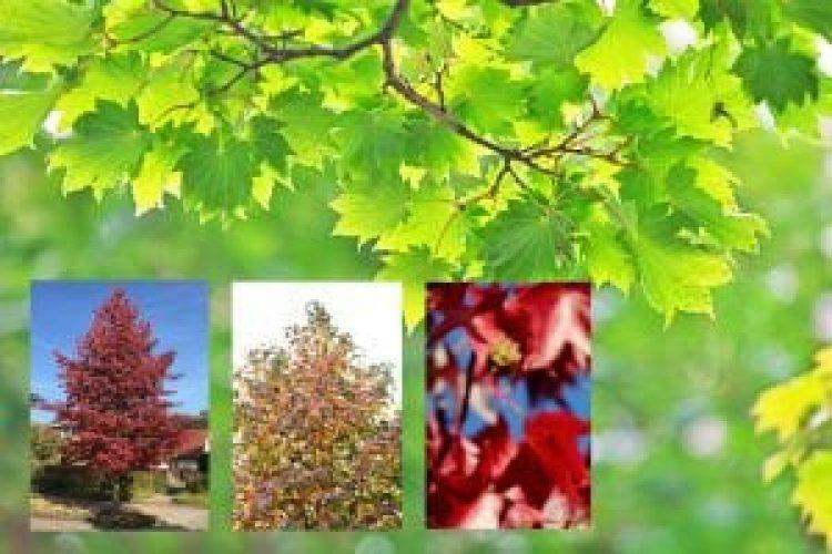 small-garden-trees-uk